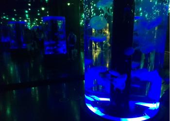 品川アクアパーク水族館11.png