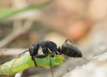 蟻 アリ.jpg